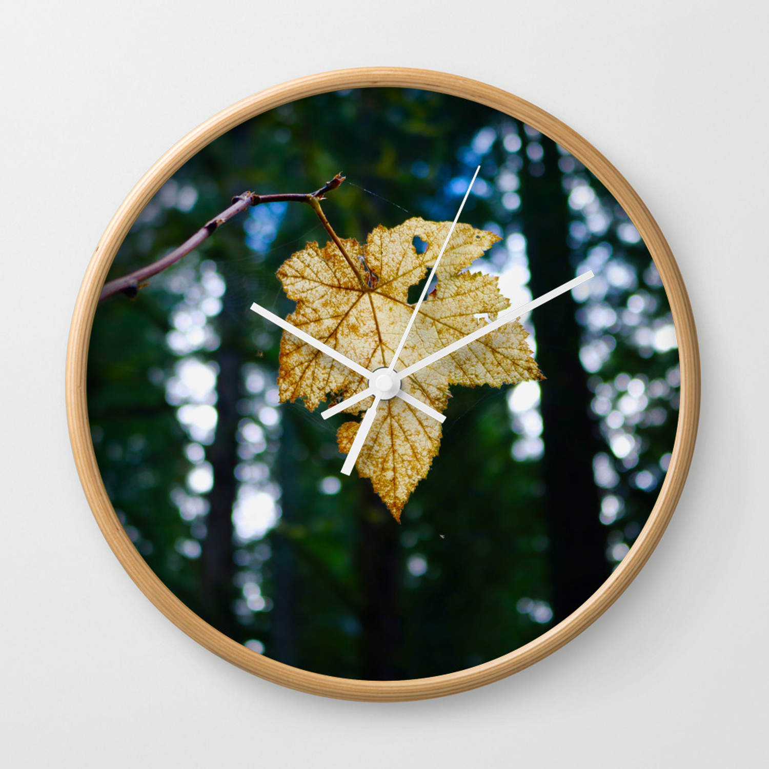Veiny Leaf in the Humboldt Forest Wall Clock