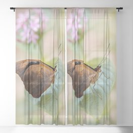 Pretty brown butterfly Sheer Curtain