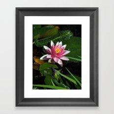 Little Water Lily  Framed Art Print