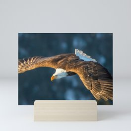 Marvelous Gracious American Bald Head Eagle Majestic Flying Gliding Through Air Close Up Ultra HD Mini Art Print