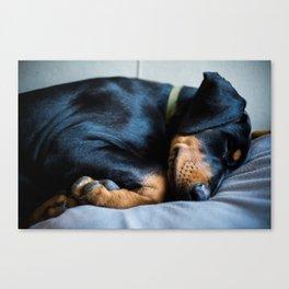 Days of Dog sitting Canvas Print