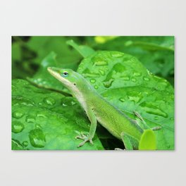 Mr. Lizard is Watching You Canvas Print