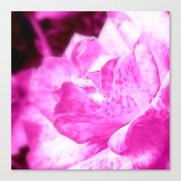 Just a  Pink Rose Canvas Print