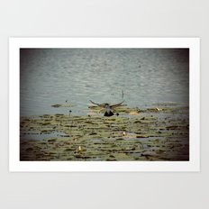 Flying Bird Hovering over Water Color Nature Photography Art Print