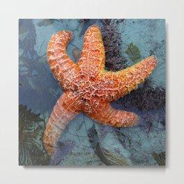 Orange Starfish in Blue Waters Metal Print