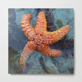 Orange Starfish in Blue Waters Metal Print