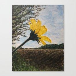 Maximilian Sunflower Canvas Print