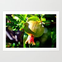 pomegranate Art Prints featuring pomegranate by  Agostino Lo Coco