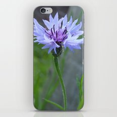 Cornflower  iPhone & iPod Skin