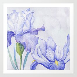 Watercolor Iris Art Print