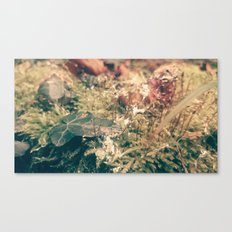 slugmoss Canvas Print