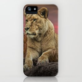 African Female Lion in the Grass at Sunset iPhone Case