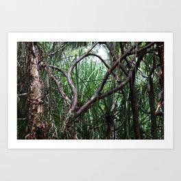 Jungles of Australia Art Print