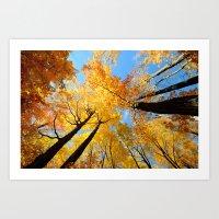 Fall Forest Sky Art Print