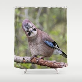 Cute Jay bird Shower Curtain
