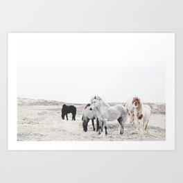 WILD AND FREE  1 - HORSES OF ICELAND Art Print