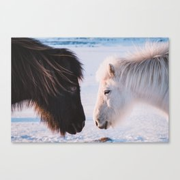 Two Icelandic Horses in snowy Landscape Canvas Print