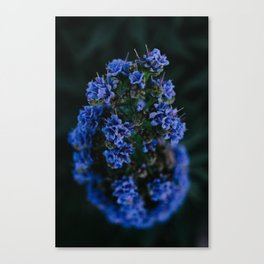 Spring Blues Canvas Print