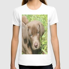 Chocolate Lovers' Lab T-shirt