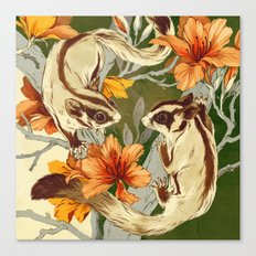 Sugar Gliders Canvas Print