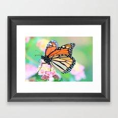 October Monarch Framed Art Print