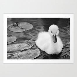 """Baby Swan - Black & White"" Art Print"