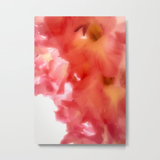 Soft Red Gladiola Metal Print