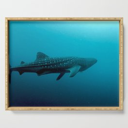 Whale shark juvenile Serving Tray