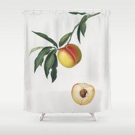 Peach (Persica julodermis) from Pomona Italiana (1817 - 1839) by Giorgio Gallesio (1772-1839) Shower Curtain