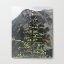 Bird on a Fir Tree Metal Print