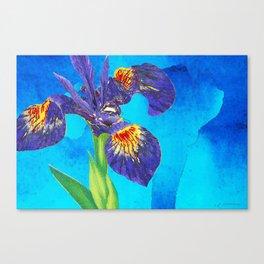 Wild Iris Art by Sharon Cummings Canvas Print
