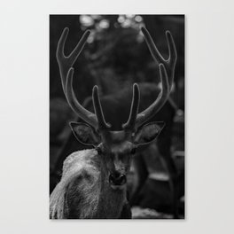 The Antlers (Black and White) Canvas Print