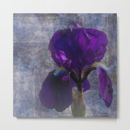 Captivating Iris Metal Print