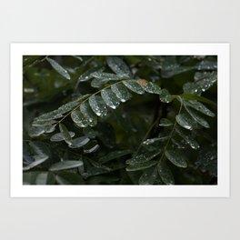 Post Rain Art Print