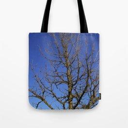 Bur Oak, Quercus macrocarpa, Wisconsin tree, prairie, savanna Tote Bag