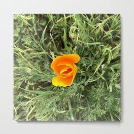 Shy California Poppy Metal Print
