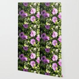 Longwood Gardens Orchid Extravaganza 37 Wallpaper