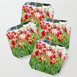Striped tulips Coaster