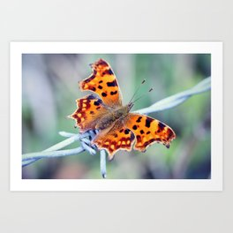 Comma Butterfly Art Print