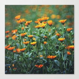 Orange Flowers #1 Canvas Print