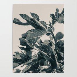 Fig Leaf Tree #society6 #decor #buyart #kirovair Poster