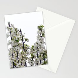 Bradford Pear Blossoms  Stationery Cards