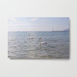 Riviera Swans Metal Print