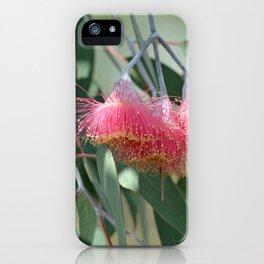 Eucalyptus Silver Princess Blossoms I iPhone Case