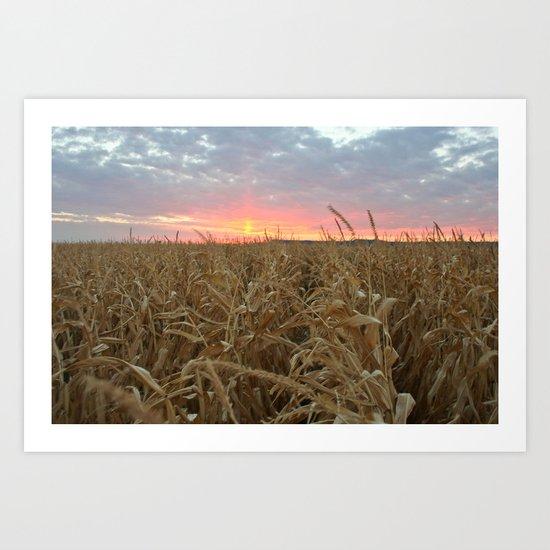Corn Maze Sunset Art Print