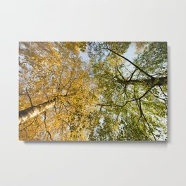 two different types of trees Metal Print
