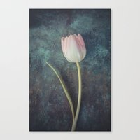 tulip Canvas Prints featuring Tulip by Maria Heyens