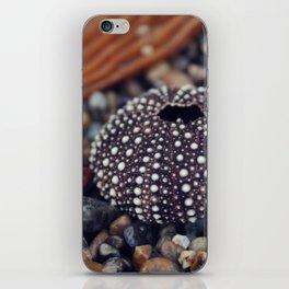 sea urchin iPhone Skin
