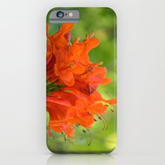 Exotic Ginger Flower Bignone 9125 Slim Case iPhone 6s