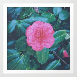 Camellia the Lonesome Art Print